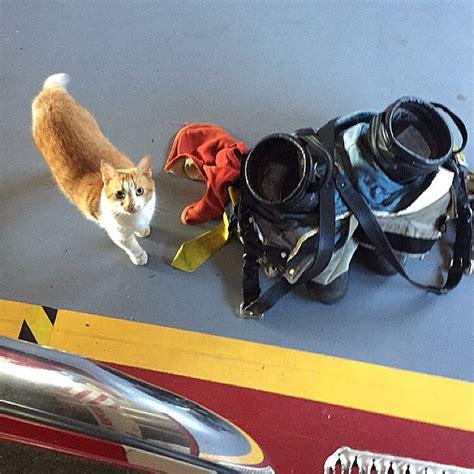 stray cat wanders  firehouse  chooses  crew