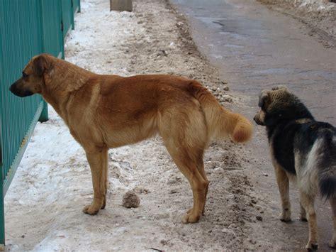 stray puppy stray dogs 点力图库