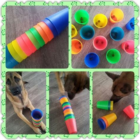 brain for dogs brain 32 place a treat inside plastic cups and stack up and let your find
