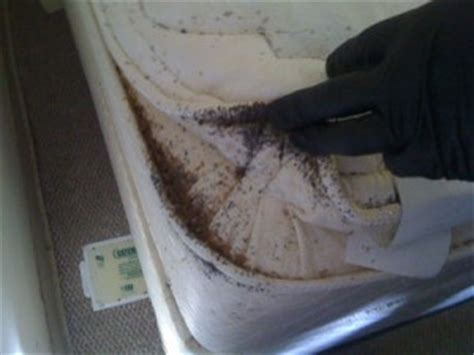 bed bugs black spots worker threatened for trying to get rid of bed bugs