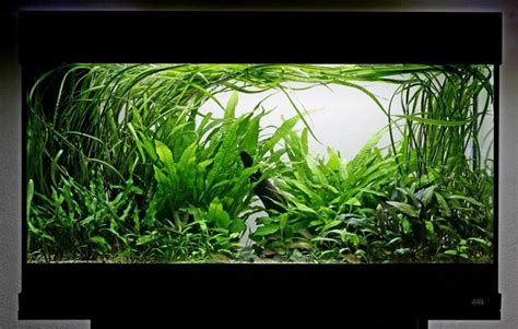 best low light aquarium plants lush low light tank nano planted aquarium pinterest