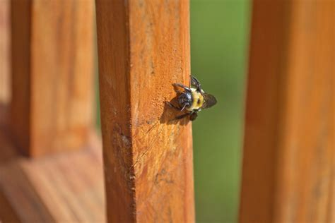 keep bees away from house how can i keep bees away from my deck debugged