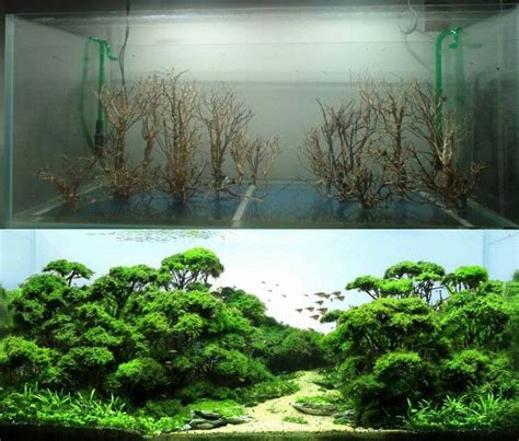 small aquarium aquascape aquascape aquarium design ideas 22 meowlogy