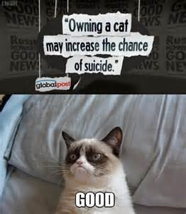 Funny Angry Cat Meme - image 445109 grumpy cat know your meme