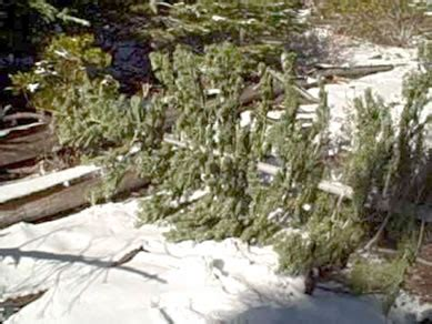 cut christmas tree utah tree permits for northern arizona and southern utah news for page lake powell arizona