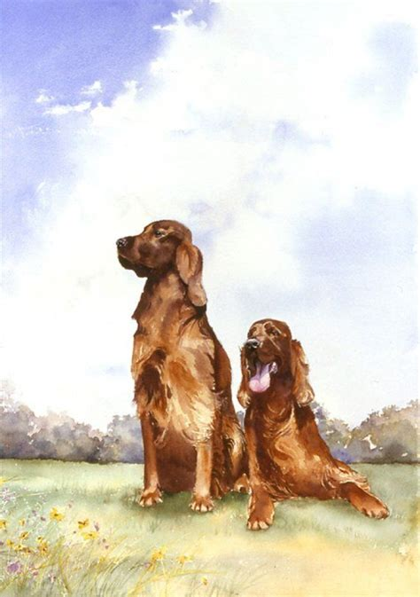setter dictionary definition 99 best images about setter irlandes on pinterest