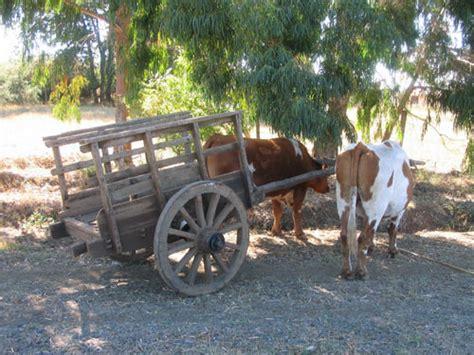 fotos de carretas de epoca la carreta chilena chile cr 243 nicas