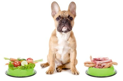 best vitamins for puppies best joint supplements for dogs 2018 our top 5 picks