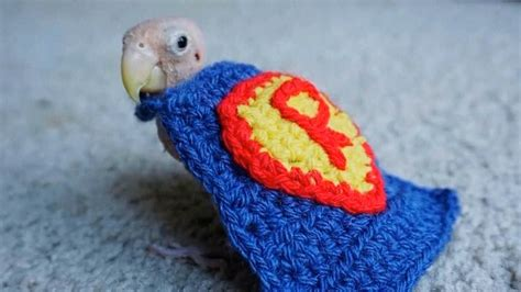 Extreme Makeover Home Edition featherless bird receives sweaters from around the world