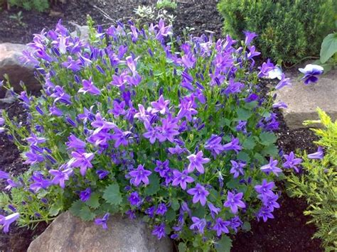 Flowers For Rock Gardens 20 Blooming Rock Garden Design Ideas And Backyard Landscaping Tips