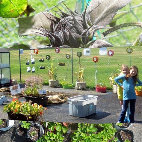Rock Garden Watertown Ct East Valley Landscape Maintenance Garden Supplies For School Garden Rock Garden Watertown Ct