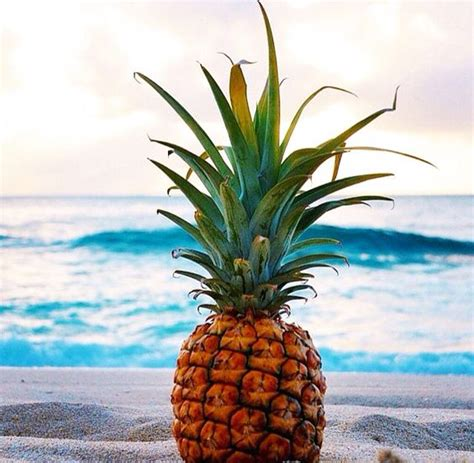 pineapple waves pinterest the world s catalog of ideas