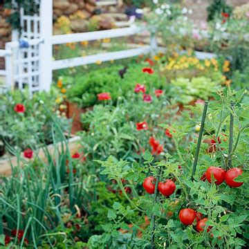 Backyard Tomatoes by Planning Your Vegetable Garden