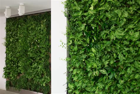 Pareti Vegetali Per Interni pareti vegetali per interni ed esterni hw style