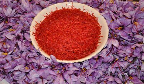 coltivare lo zafferano in vaso come coltivare lo zafferano in vaso serra o orto