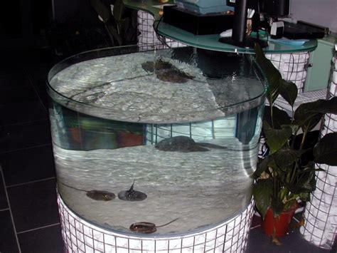 vasche per acquari vasche per acquari artigianali fantail