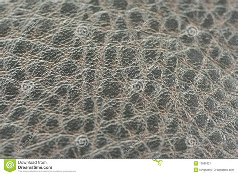 alligator skin upholstery alligator skin fabric stock image image of snake closeup