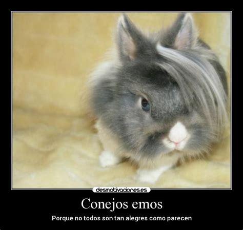 imagenes emos alegres conejos emos desmotivaciones