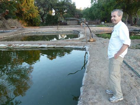 backyard fish pond tilapia tilapia steve grey s travels