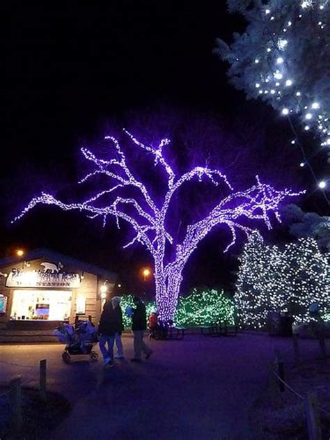 lights before christmas zoo x mas