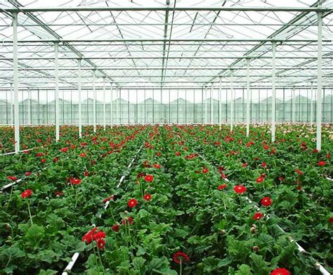 commercial light deprivation greenhouse greenhouse curtain systems for shade energy savings or