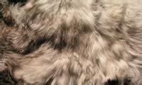 hair vs fur difference between hair and fur hair vs fur