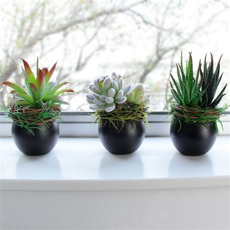 piante da arredo interno piante finte da interno piante finte piante