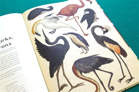 animalium welcome to the we love to read animalium welcome to the museum an animal treasury in a book