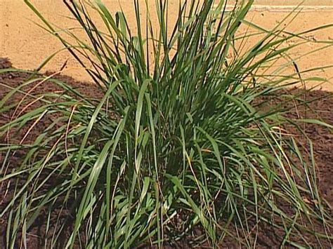 common landscaping plants low maintenance plants for easy landscaping diy