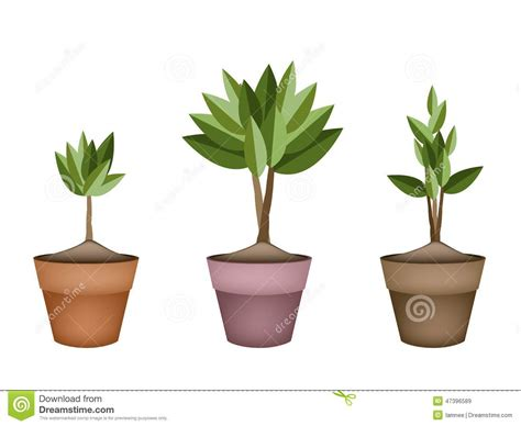 ceramic planter pots home design lakaysports com ceramic ceramic pots for plants garden pot vintage terracotta