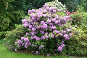 planfor conseils de jardinage l exposition