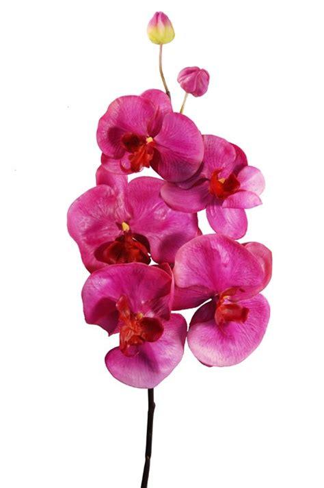 co de fiore orchidea tropicale phalaenopsis fucsia fiori e piante