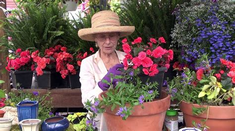 how to plant a container garden how to plant a container garden