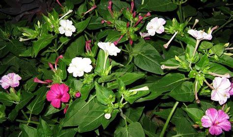 fiori particolari fiori particolari piante perenni giardino con fiori