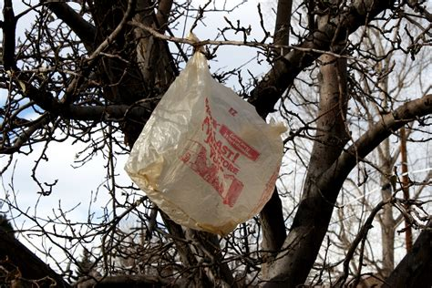plastic bag in tree picture free photograph photos