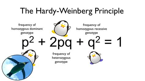 Hardy Weinberg Principle | the hardy weinberg principle watch your ps and qs youtube