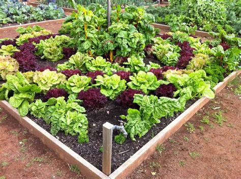 Beautiful Vegetable Garden Home Ideals Pinterest Beautiful Vegetable Garden Pictures