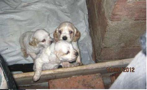 imagenes animales recien nacidos imagenes de perritos cocker recien nacidos imagui
