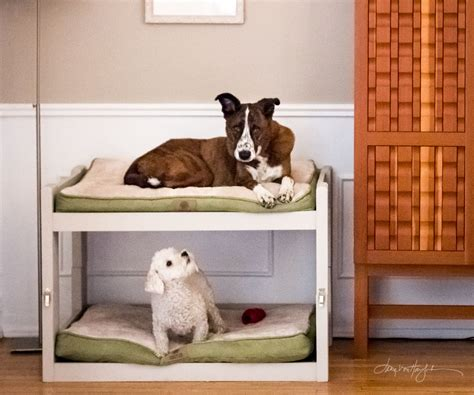 Bunk Bed For Dogs Diy Bunk Beds 8 Steps With Pictures