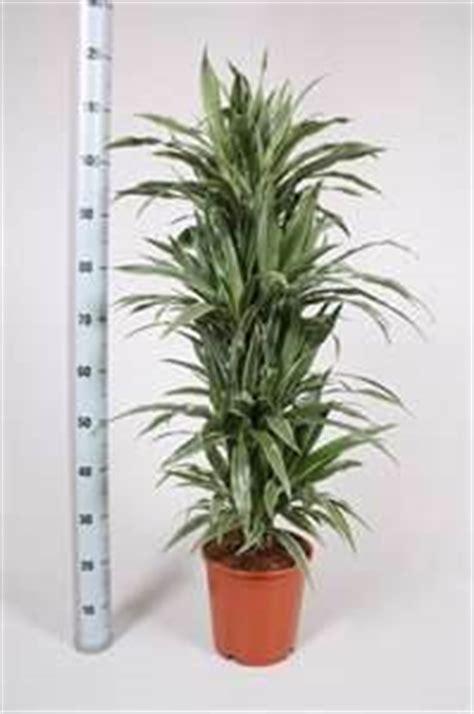 top indoor plants  air filters  homewarneckei