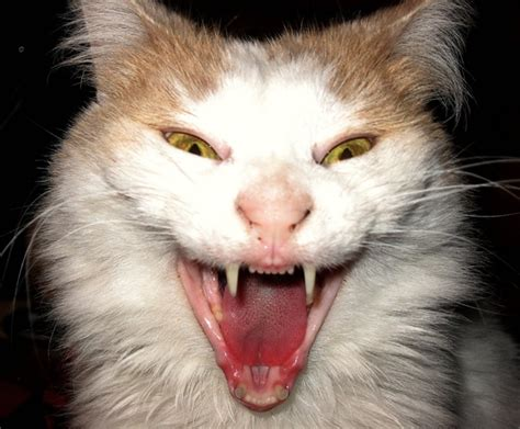 40 Scary And Cat Pictures And Fur