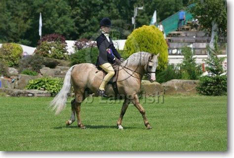welsh section a showing bob langrish equestrian photographer images