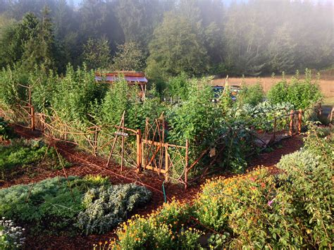 Growing Vegetables In Backyard Permaculture Gardens The Dirt Rich