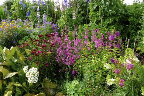 backyard flowers creating a quaint cottage garden
