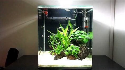 Java Fern and Anubias   Freshwater Nano Cube Aquarium (Day