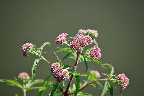 zitmeubelen brugge foto bloemen en planten 28 images website start