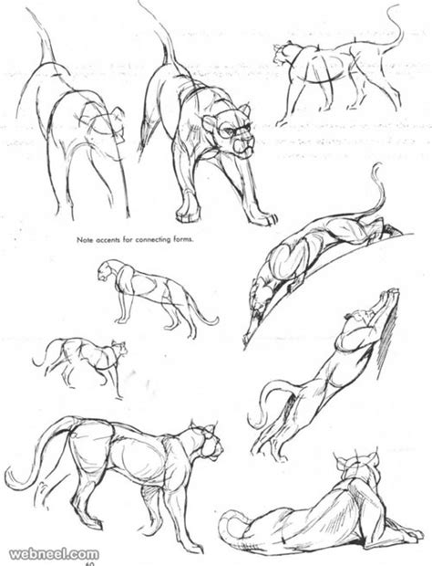 how to doodle animals 25 beautiful animal drawings for your inspiration how to