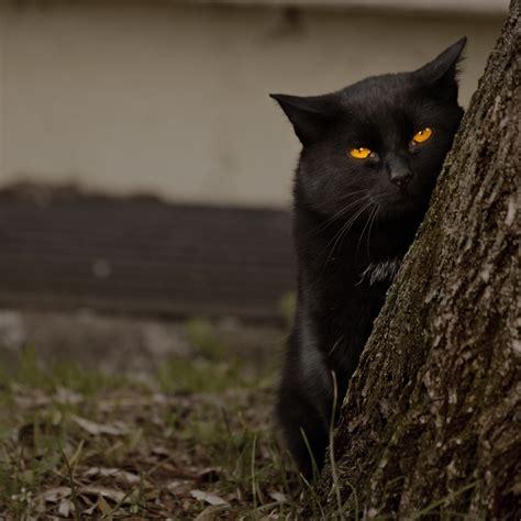 cat under wallpaper grumpy black cat behind a tree desktop wallpapers 1024x1024