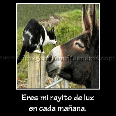 imagenes de amor chistosos del burro shrek imagenes chistosas de burros con frases imagui