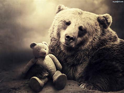 imagenes de osos wallpaper miś niedźwiedź pluszowy na pulpit